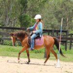 Animal Farms - Horse ride